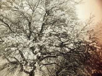 seasons a